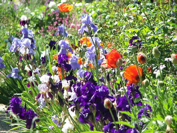Le jardin de Claude Monet à Giverny 20060602_016