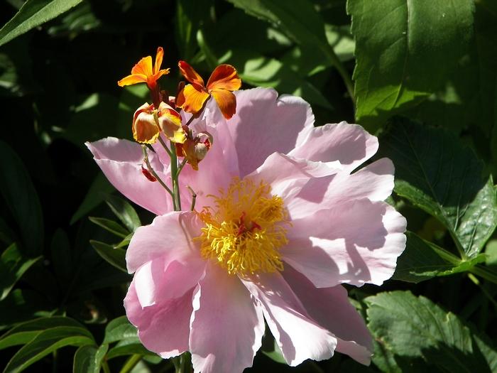 Le jardin de Claude Monet à Giverny 20060602_049