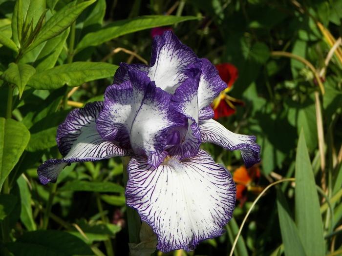Le jardin de Claude Monet à Giverny 20060602_091
