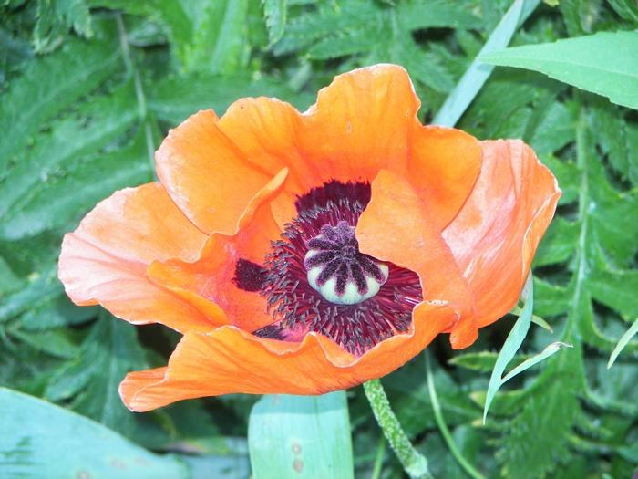 Le jardin de Claude Monet à Giverny 20060602_104