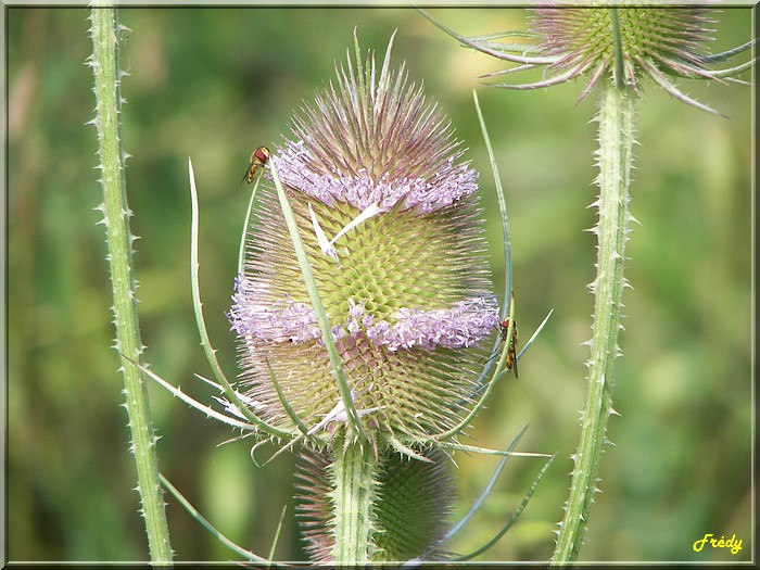 Plante sèche 20060714_063