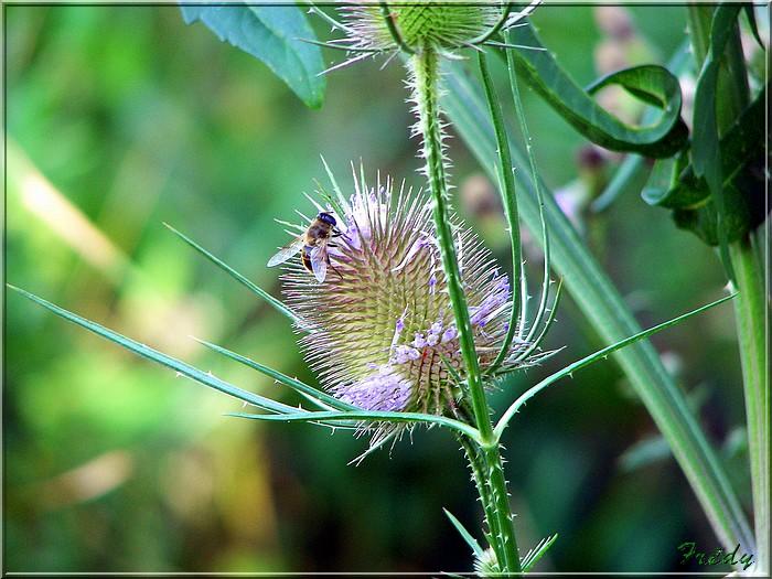 Plante sèche 20060722_075