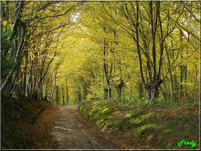 automne et soleil en forêt 20061117_019