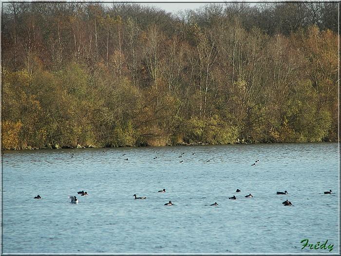 A la réserve ornithologique 20061210_013