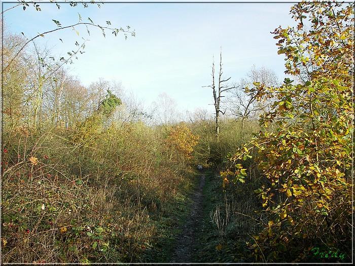 A la réserve ornithologique 20061210_015