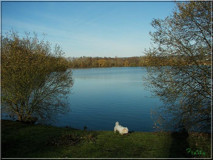 A la réserve ornithologique 20061210_022