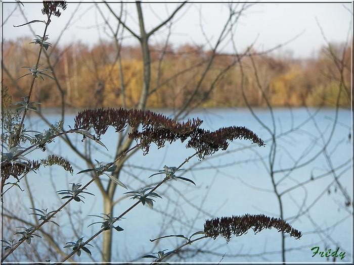 A la réserve ornithologique 20061210_025