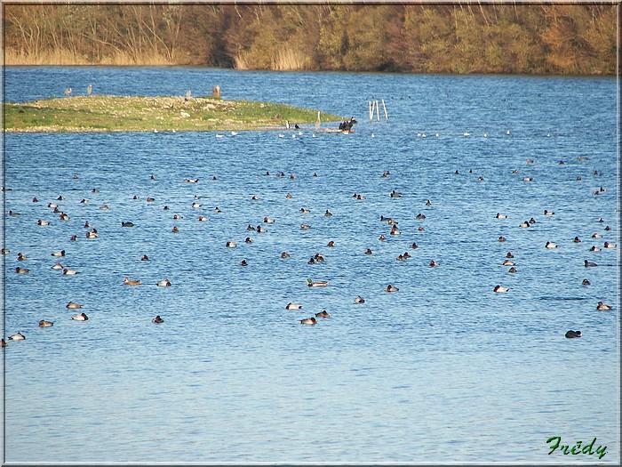 A la réserve ornithologique 20061210_052