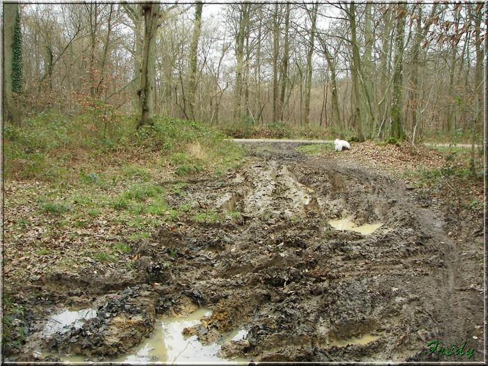 En forêt de Bord/Louviers 20070128_010
