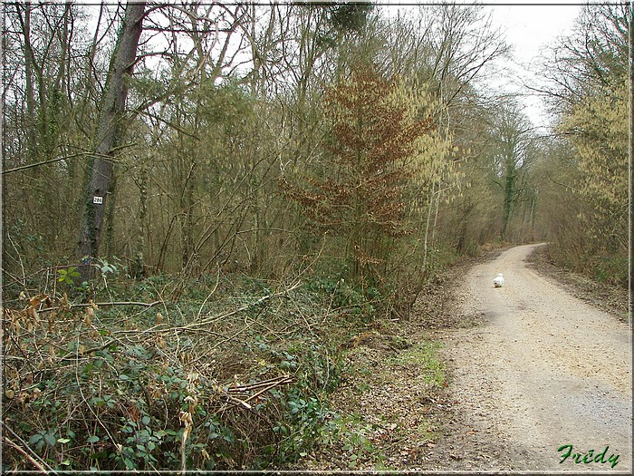 En forêt de Bord/Louviers 20070128_020