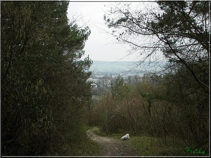 En forêt de Bord/Louviers 20070128_024