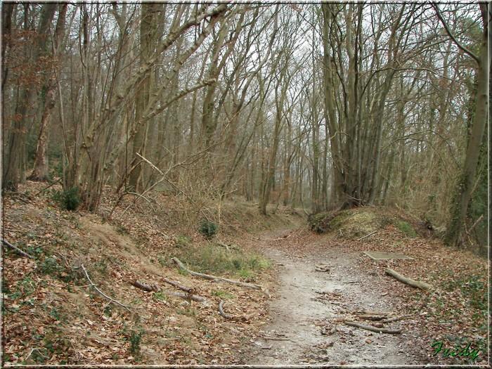 En forêt de Bord/Louviers 20070128_026