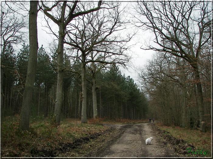En forêt de Bord/Louviers 20070128_029