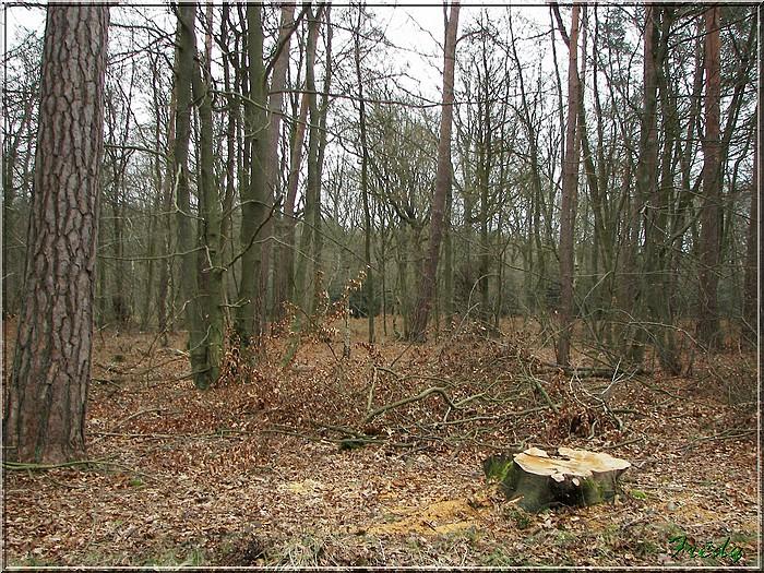 En forêt de Bord/Louviers 20070128_032