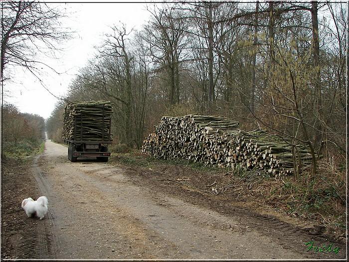 En forêt de Bord/Louviers 20070128_036