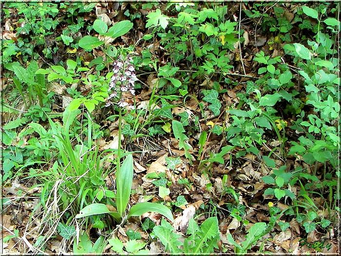 Normanville et Hondouville 20070501_105