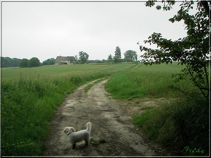 La Mare Saint Lubin 20070526_056