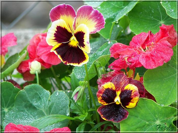 Petit tour au jardin 20070825_001