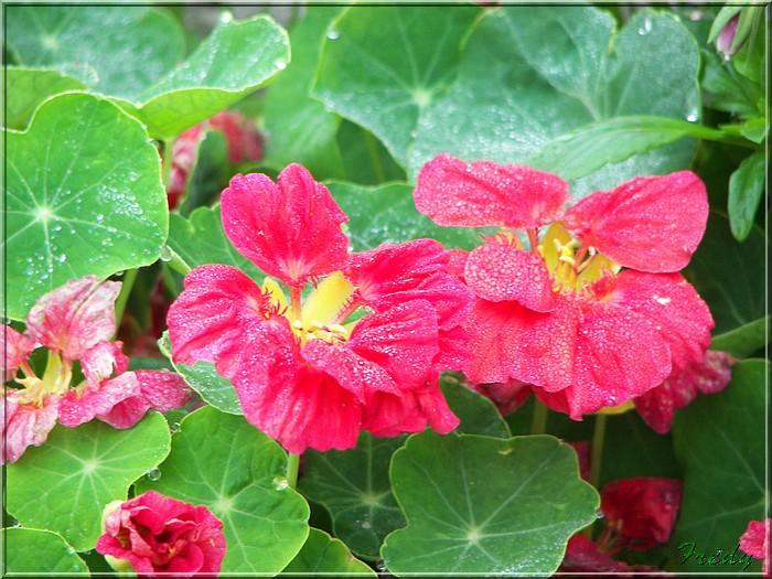 Petit tour au jardin 20070825_004
