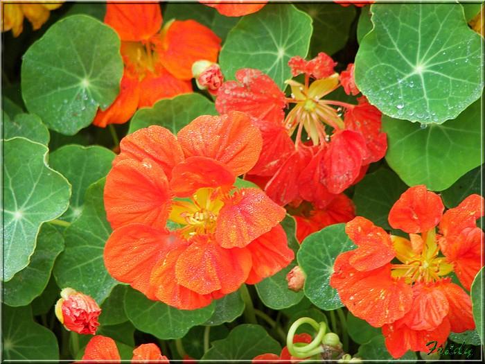 Petit tour au jardin 20070825_008