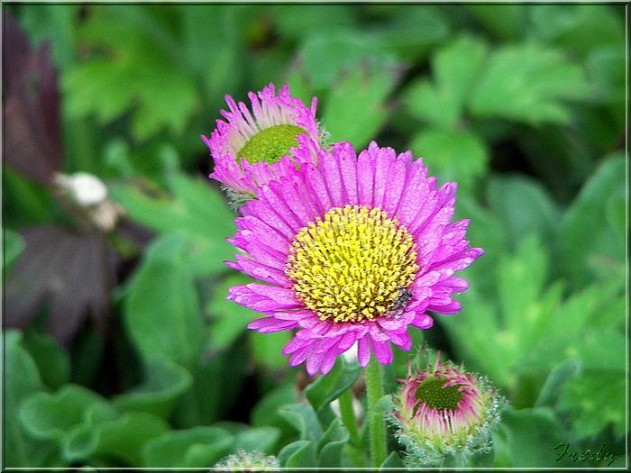 Petit tour au jardin 20070825_011