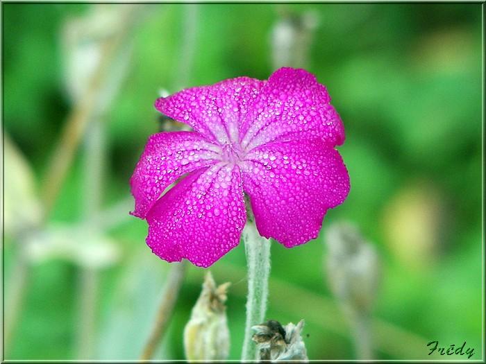 Petit tour au jardin 20070825_012