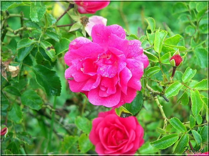 Petit tour au jardin 20070825_014