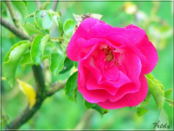 Petit tour au jardin 20070825_015