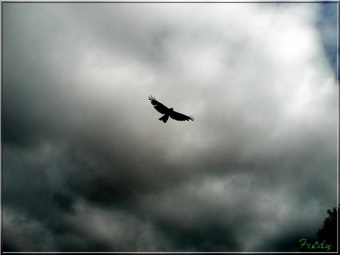 Baie de Somme, premier jour 20070908_069