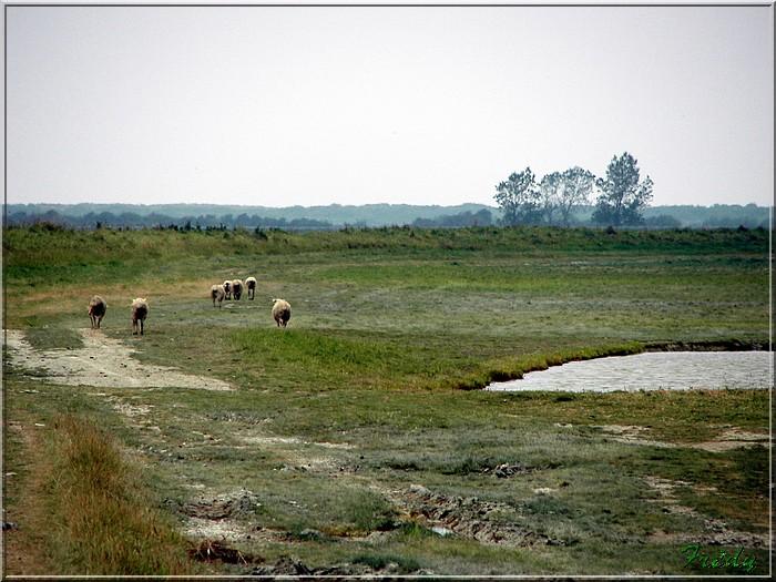 Baie de Somme, premier jour 20070908_086