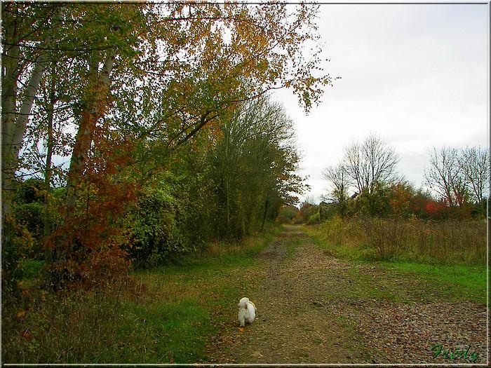 L'automne à l'étang de Croth 20071108_001
