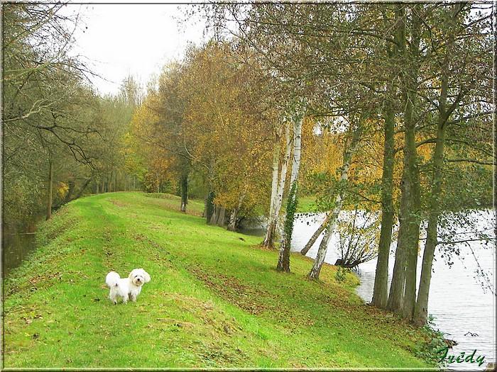 L'automne à l'étang de Croth 20071108_013