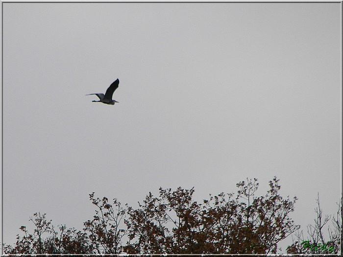 L'automne à l'étang de Croth 20071108_046