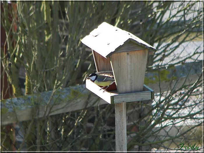 La mangeoire aux oiseaux 20071215_005
