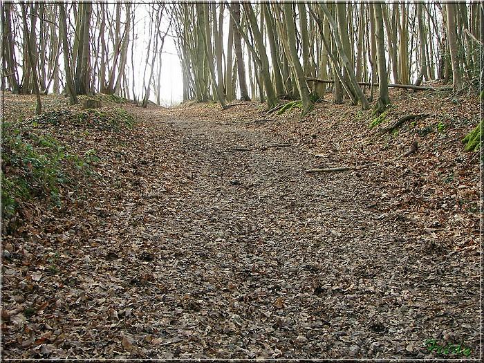Giverny et les prémices du printemps 20080125_036