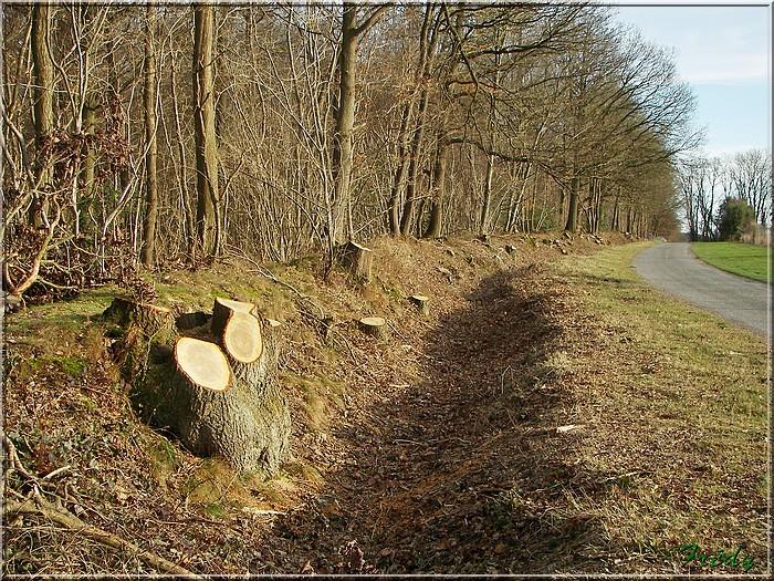 Giverny et les prémices du printemps 20080125_041
