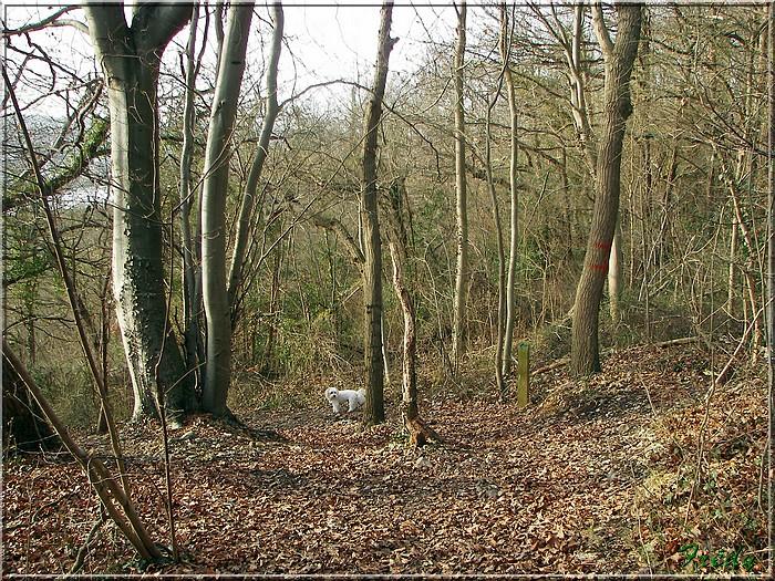 Giverny et les prémices du printemps 20080125_048