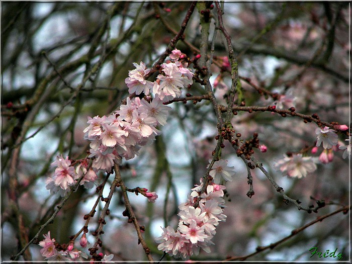 Giverny et les prémices du printemps 20080125_081
