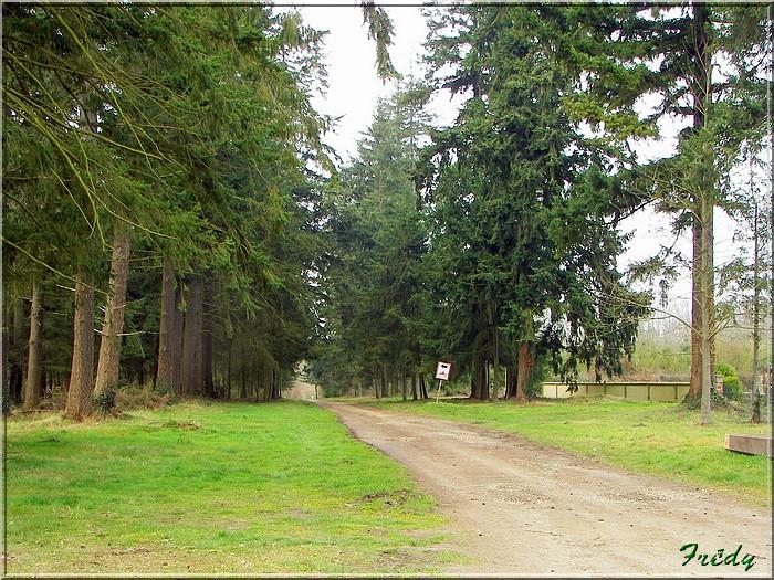 Le sentier de Pierre Ronde (Beaumesnil) 20080221_009
