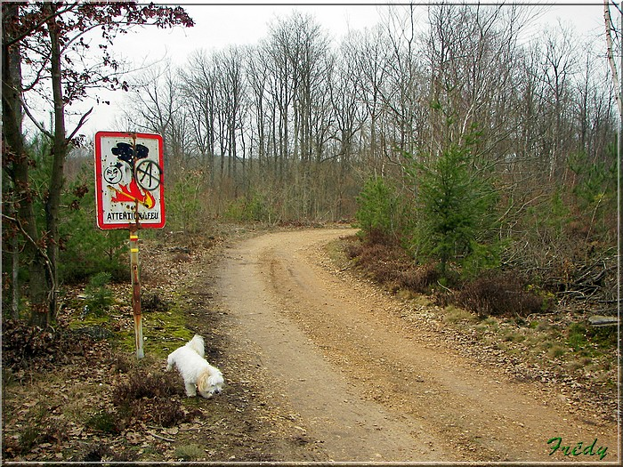 Le sentier de Pierre Ronde (Beaumesnil) 20080221_011