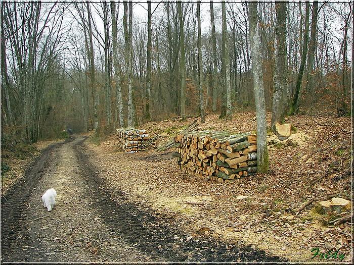 Le sentier de Pierre Ronde (Beaumesnil) 20080221_031