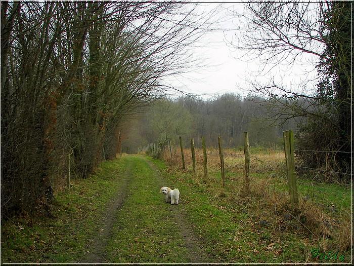Le sentier de Pierre Ronde (Beaumesnil) 20080221_039