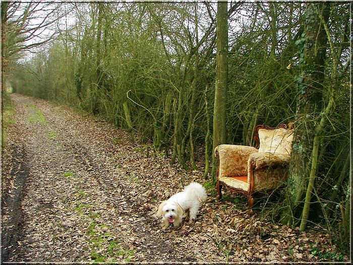 Le sentier de Pierre Ronde (Beaumesnil) 20080221_046