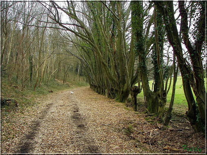 Le sentier de Pierre Ronde (Beaumesnil) 20080221_050