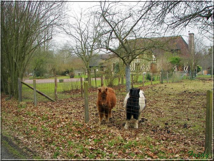 Le sentier de Pierre Ronde (Beaumesnil) 20080221_055