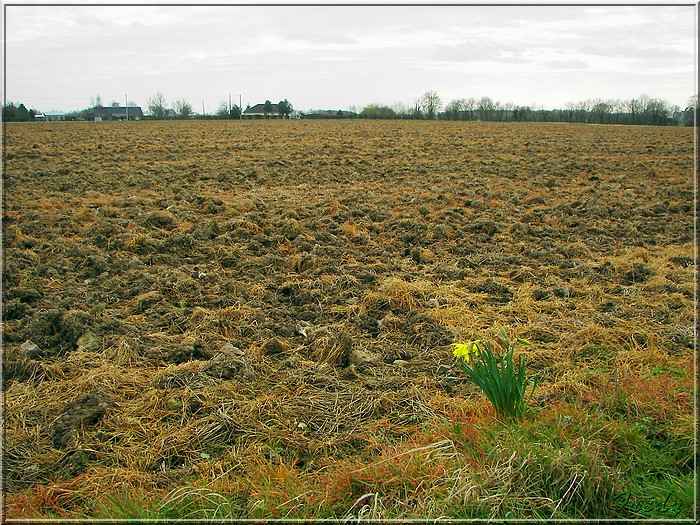 Broglie, le Prieuré 20080301_044
