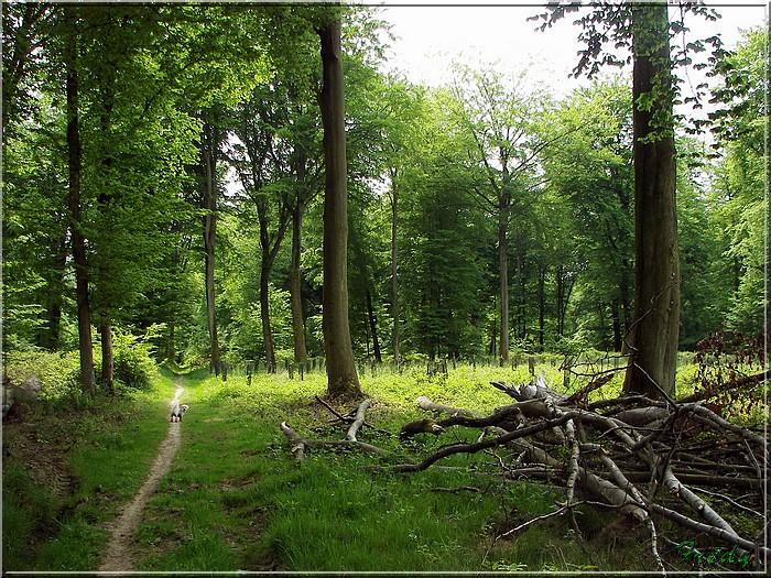 Le Chêne des Régales 20080509_012