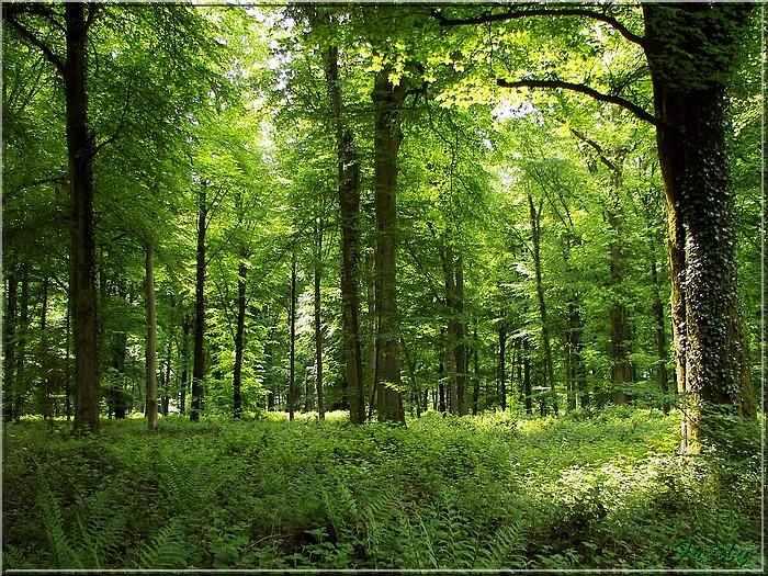 Le Chêne des Régales 20080509_018