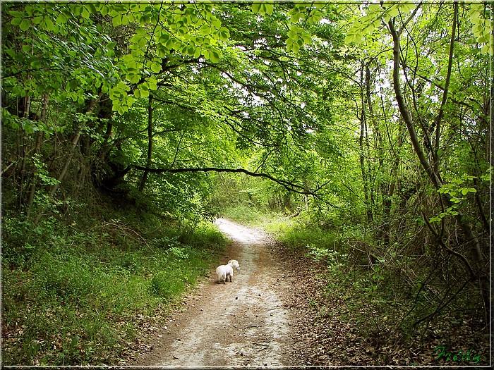 Le Chêne des Régales 20080509_046
