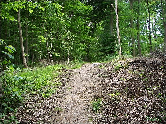 Lyons la Forêt : La Fontaineresse 20080512_033